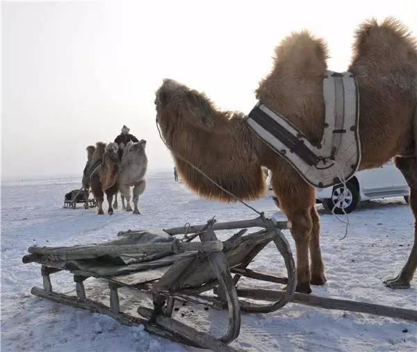 【阿努美图】摄影师宝音:内蒙古大草原冬季采风作品欣赏 第7张