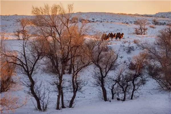 【阿努美图】摄影师宝音:内蒙古大草原冬季采风作品欣赏 第12张