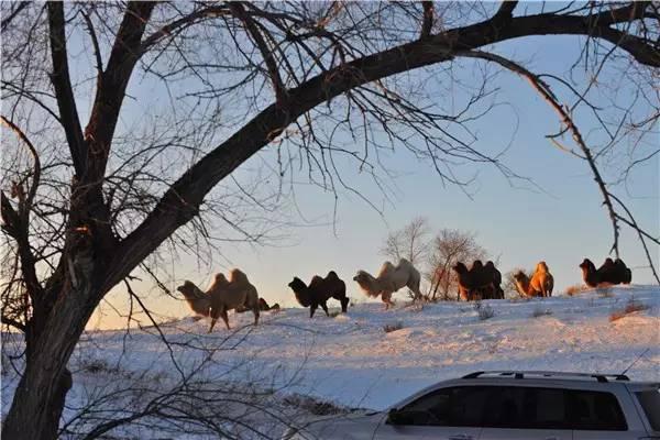 【阿努美图】摄影师宝音:内蒙古大草原冬季采风作品欣赏 第13张