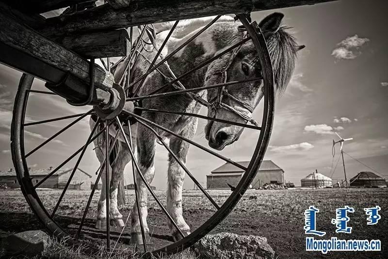 【音频·图片】蒙古族青年摄影家宝日玛个人摄影展 第4张