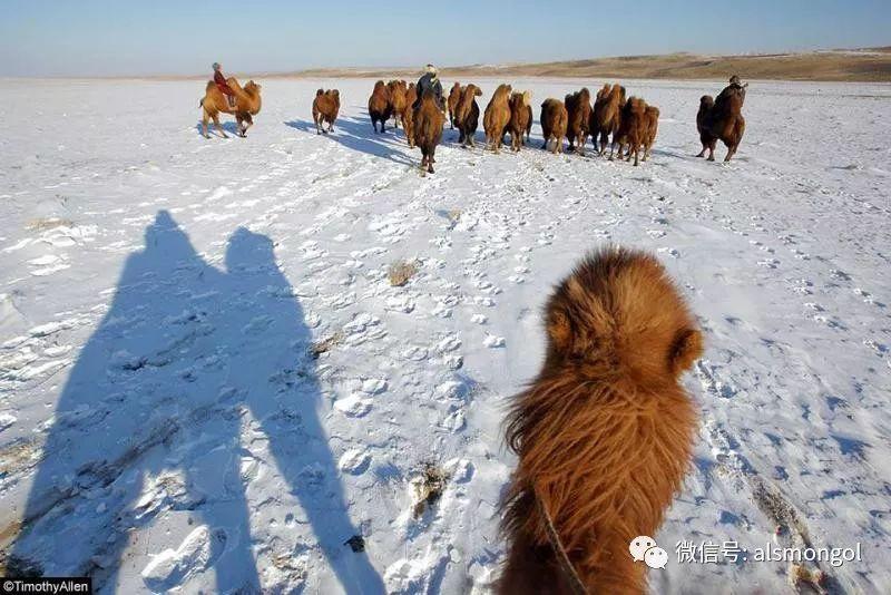 【摄影】蒙古冬季美景 第15张