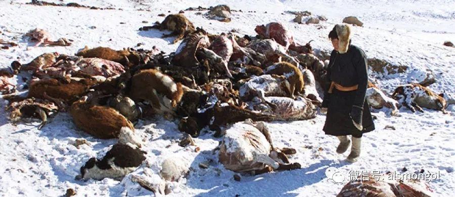 【摄影】蒙古冬季美景 第23张