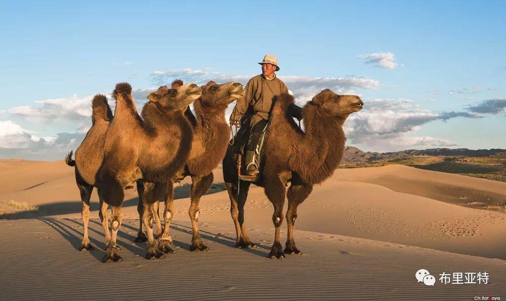 蒙古摄影师巴特扎亚摄影作品欣赏 第14张 蒙古摄影师巴特扎亚摄影作品欣赏 蒙古文化