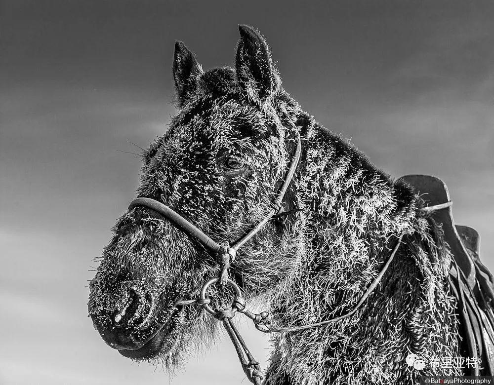 蒙古摄影师巴特扎亚摄影作品欣赏 第28张 蒙古摄影师巴特扎亚摄影作品欣赏 蒙古文化