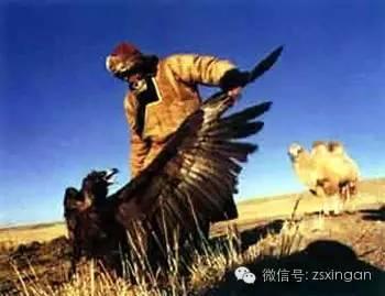 民俗 | 蒙古族狩猎禁忌 第3张 民俗 | 蒙古族狩猎禁忌 蒙古文库