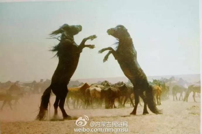 【组图】80年代的内蒙古,致我们的纯真年代! 第4张
