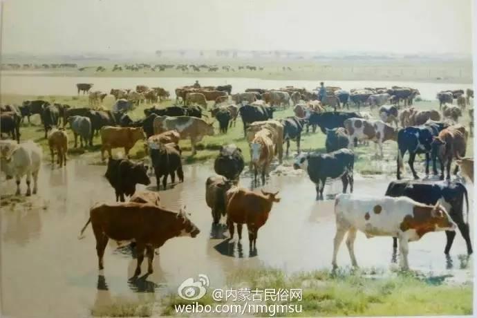 【组图】80年代的内蒙古,致我们的纯真年代! 第10张