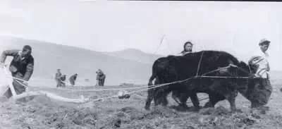 赴内蒙古插队知青(图集) 第3张