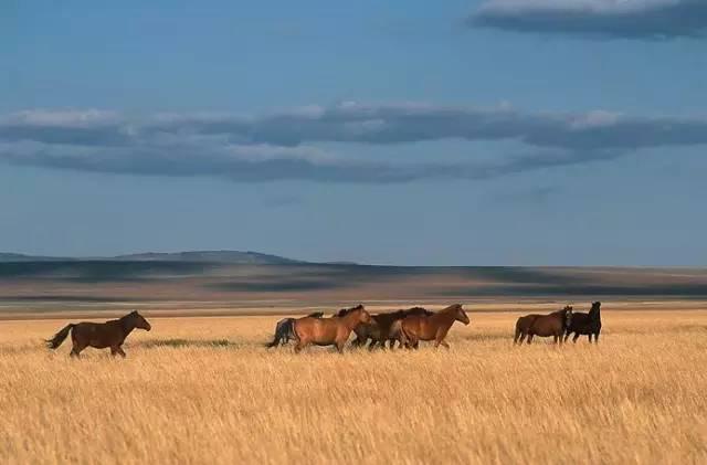 展现内蒙古风情的唯美图片,艺术源自生活 第8张 展现内蒙古风情的唯美图片,艺术源自生活 蒙古文化