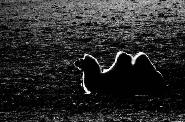 展现内蒙古风情的唯美图片,艺术源自生活 第23张 展现内蒙古风情的唯美图片,艺术源自生活 蒙古文化