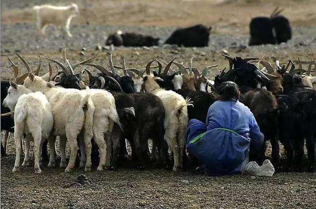 展现内蒙古风情的唯美图片,艺术源自生活 第24张 展现内蒙古风情的唯美图片,艺术源自生活 蒙古文化