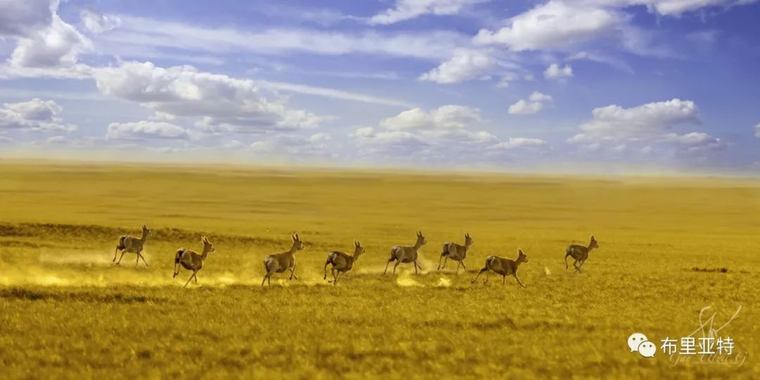 旅行摄影师甘乌力吉的摄影作品欣赏,太震撼! 第9张 旅行摄影师甘乌力吉的摄影作品欣赏,太震撼! 蒙古文化