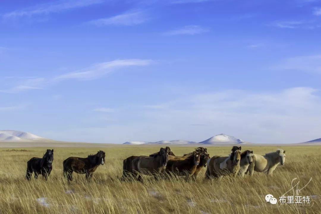旅行摄影师甘乌力吉的摄影作品欣赏,太震撼! 第11张 旅行摄影师甘乌力吉的摄影作品欣赏,太震撼! 蒙古文化