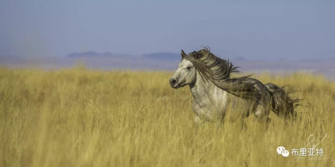 旅行摄影师甘乌力吉的摄影作品欣赏,太震撼! 第15张 旅行摄影师甘乌力吉的摄影作品欣赏,太震撼! 蒙古文化