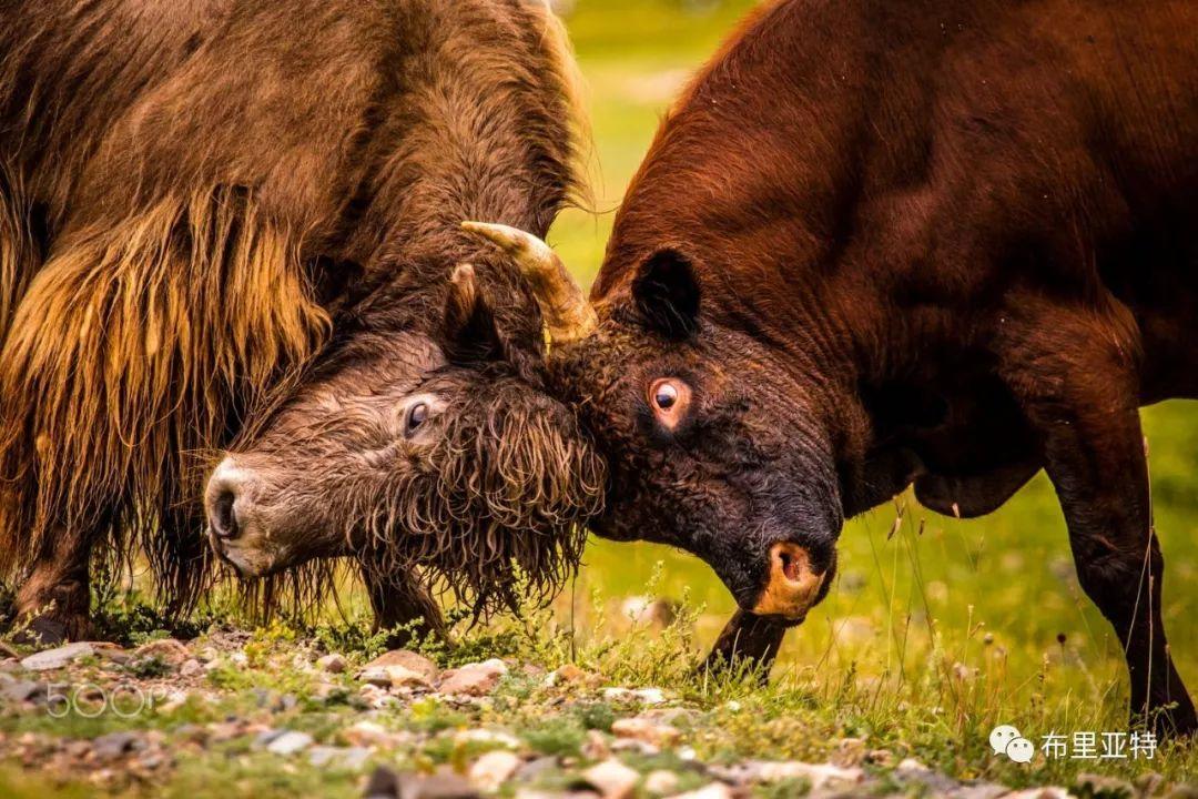 旅行摄影师甘乌力吉的摄影作品欣赏,太震撼! 第33张 旅行摄影师甘乌力吉的摄影作品欣赏,太震撼! 蒙古文化