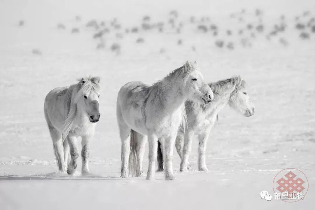 旅行摄影师甘乌力吉的摄影作品欣赏,太震撼! 第68张 旅行摄影师甘乌力吉的摄影作品欣赏,太震撼! 蒙古文化