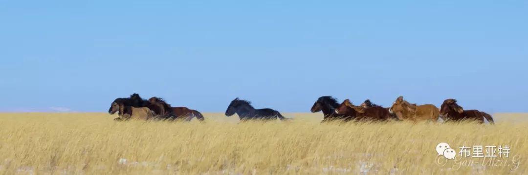 旅行摄影师甘乌力吉的摄影作品欣赏,太震撼! 第67张 旅行摄影师甘乌力吉的摄影作品欣赏,太震撼! 蒙古文化