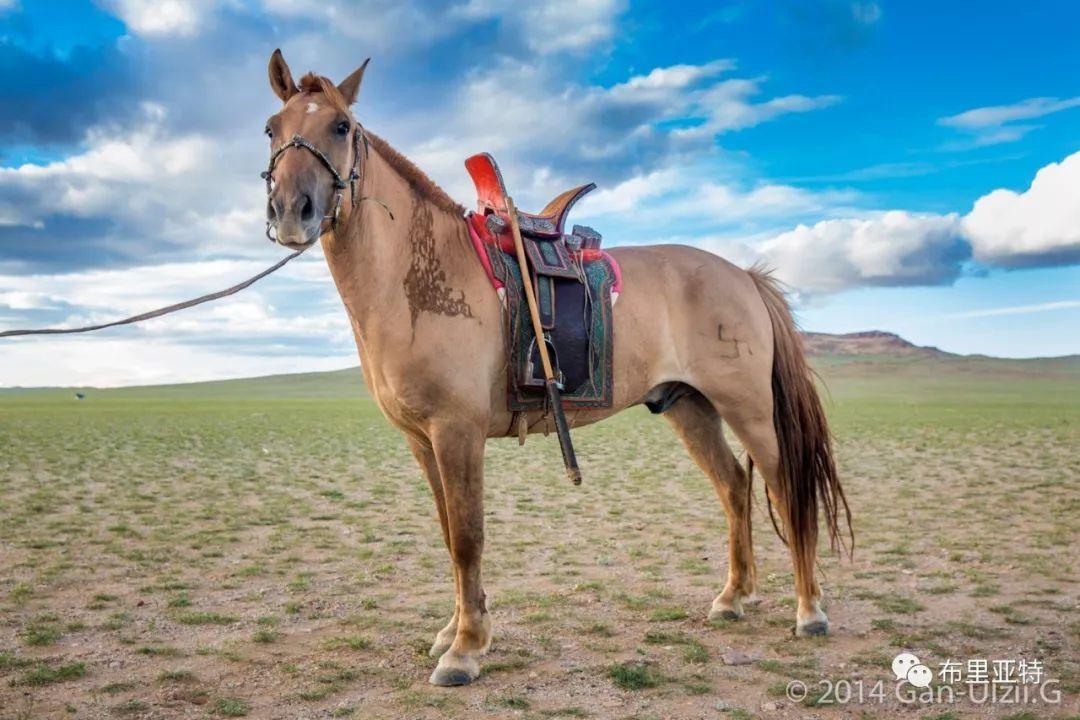 旅行摄影师甘乌力吉的摄影作品欣赏,太震撼! 第70张 旅行摄影师甘乌力吉的摄影作品欣赏,太震撼! 蒙古文化