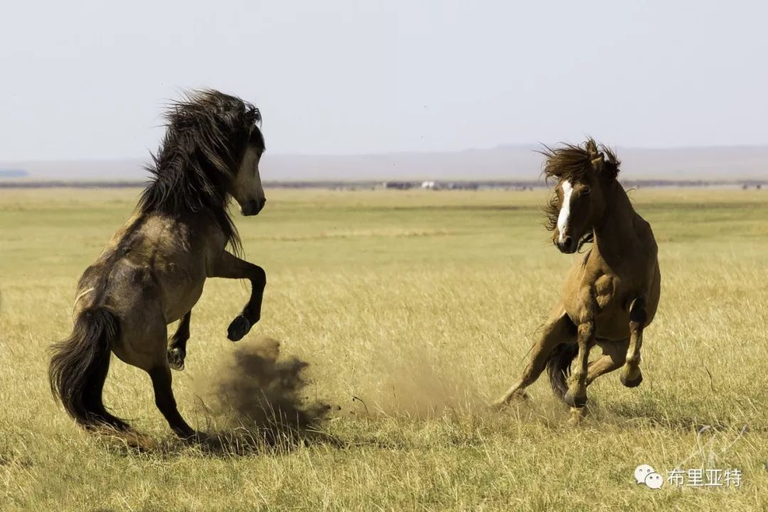 旅行摄影师甘乌力吉的摄影作品欣赏,太震撼! 第80张 旅行摄影师甘乌力吉的摄影作品欣赏,太震撼! 蒙古文化