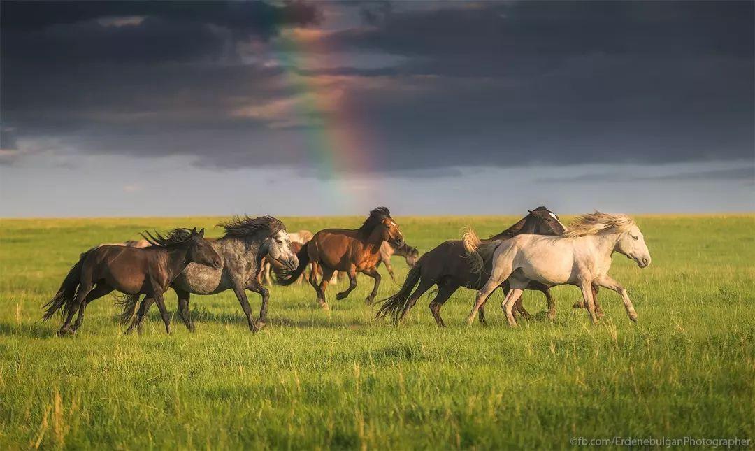 青年摄影师B·额尔登布勒干镜头下的蒙古大地,令人向往 第28张 青年摄影师B·额尔登布勒干镜头下的蒙古大地,令人向往 蒙古文化