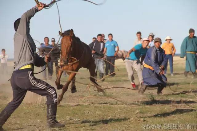 【蒙古影像】100张蒙古图片 记录最真实的蒙古 第4张