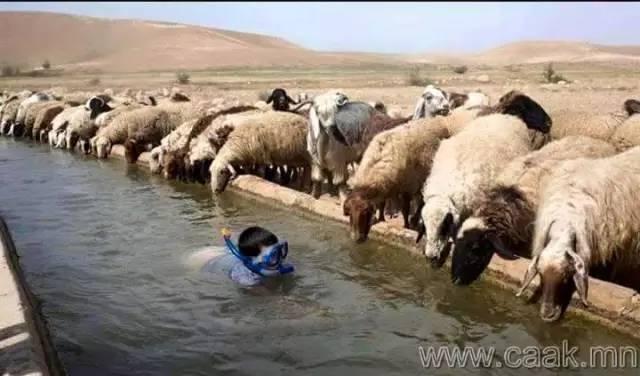 【蒙古影像】100张蒙古图片 记录最真实的蒙古 第43张