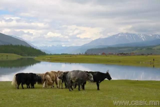 【蒙古影像】100张蒙古图片 记录最真实的蒙古 第48张