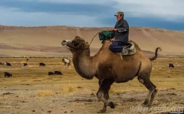 【蒙古影像】100张蒙古图片 记录最真实的蒙古 第52张