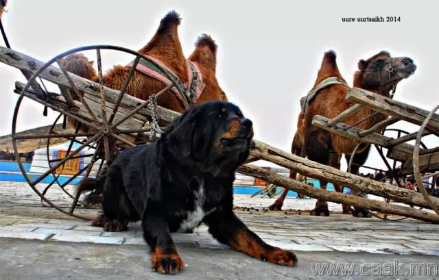 【蒙古影像】100张蒙古图片 记录最真实的蒙古 第57张