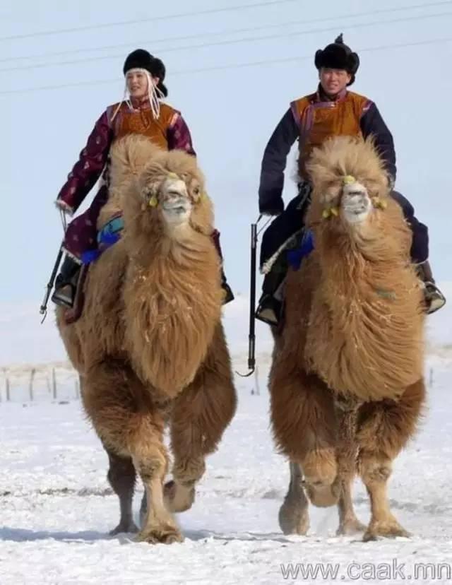 【蒙古影像】100张蒙古图片 记录最真实的蒙古 第71张