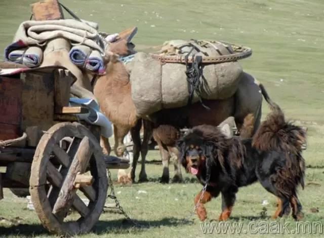 【蒙古影像】100张蒙古图片 记录最真实的蒙古 第70张