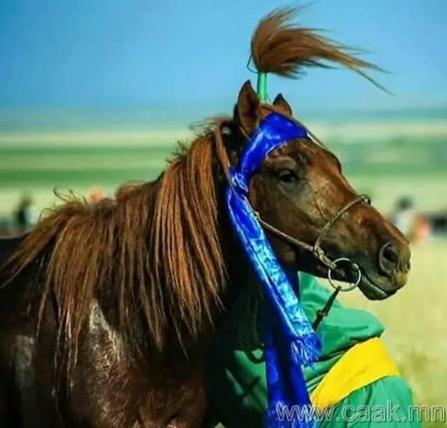 【蒙古影像】100张蒙古图片 记录最真实的蒙古 第74张