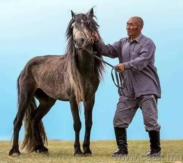 【蒙古影像】100张蒙古图片 记录最真实的蒙古 第78张