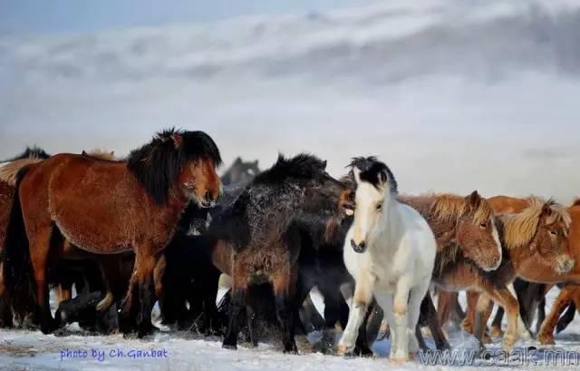 【蒙古影像】100张蒙古图片 记录最真实的蒙古 第90张