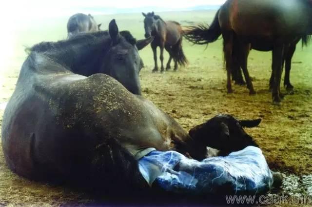 【蒙古影像】100张蒙古图片 记录最真实的蒙古 第95张