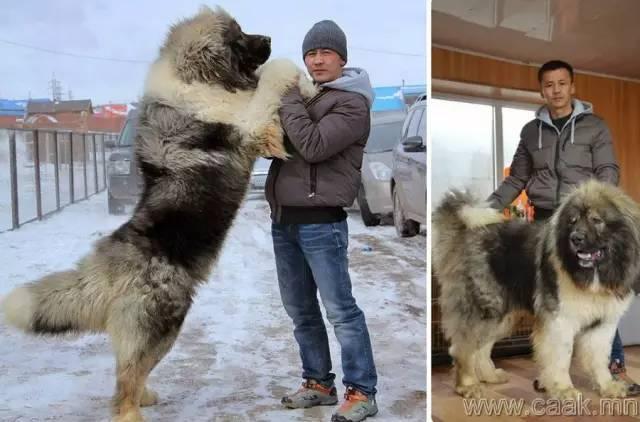 【蒙古影像】100张蒙古图片 记录最真实的蒙古 第99张