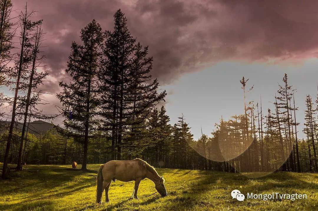 蒙古影像-- Henne Metz 第11张