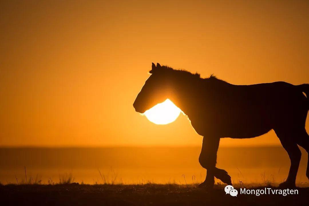 蒙古影像-- khangaikhuu.P 第22张
