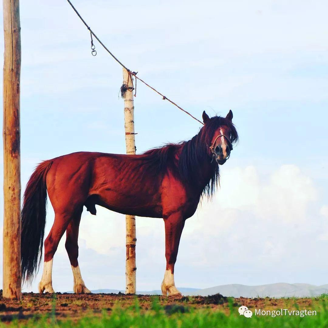 蒙古影像-ch ganbat 第23张