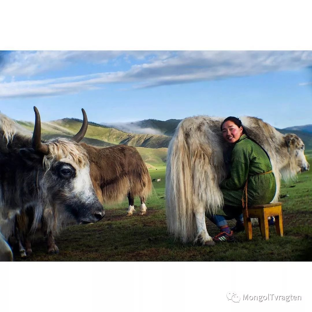 蒙古影像- c8x photography 第3张