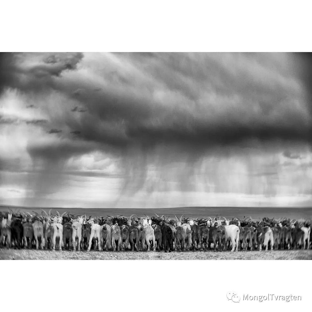 蒙古影像- c8x photography 第6张