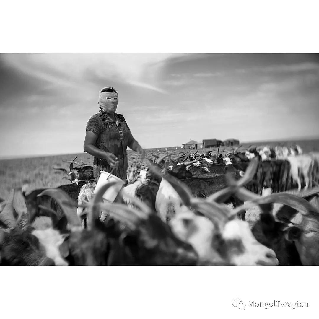 蒙古影像- c8x photography 第29张