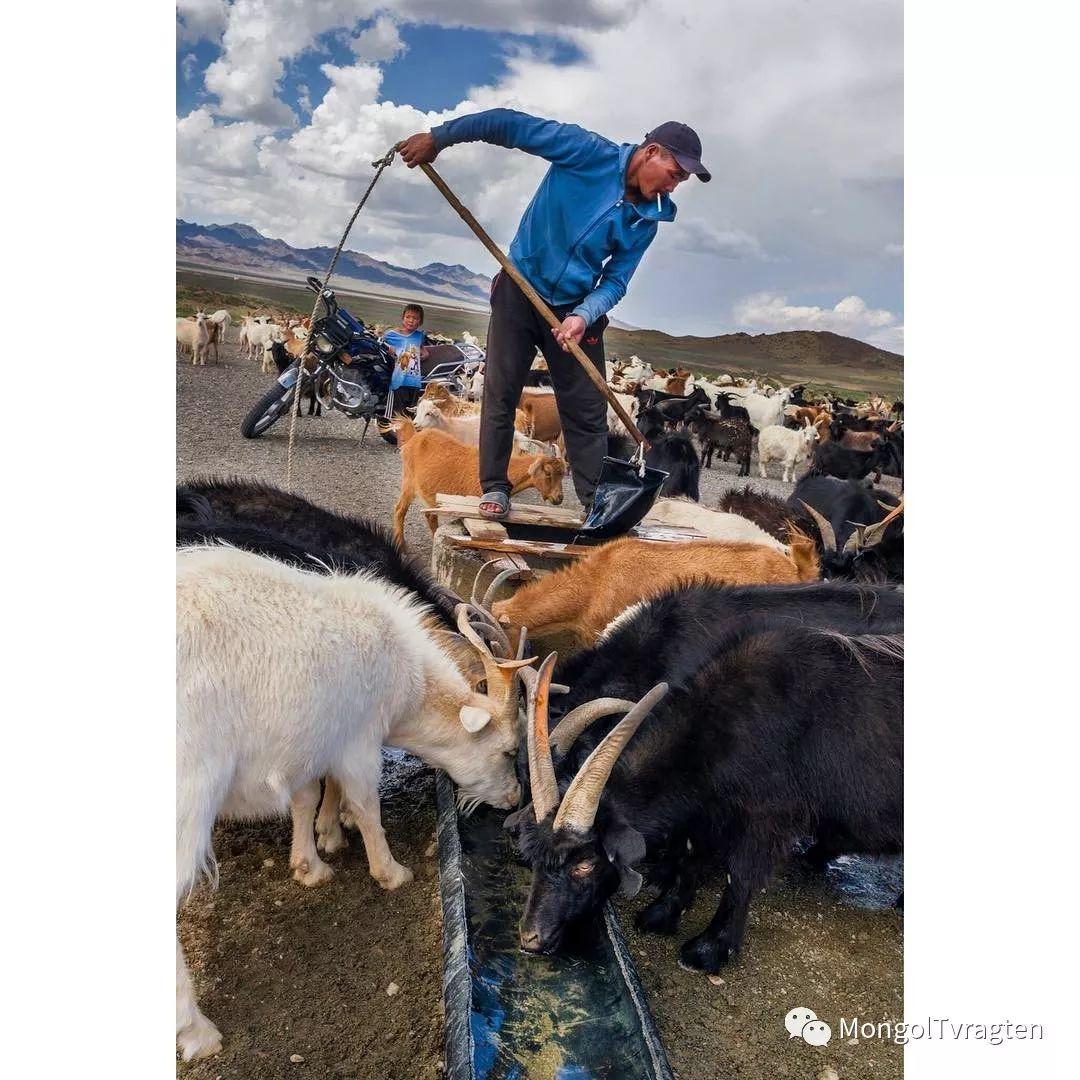 蒙古影像- c8x photography 第31张