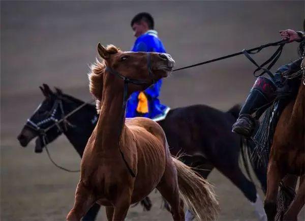 摄影师钢特木尔作品:镜头记录草原文化 第3张 摄影师钢特木尔作品:镜头记录草原文化 蒙古文化