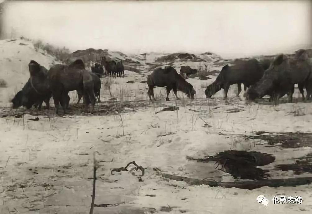 蒙古往事:巴尔虎 & 边界地区 第8张 蒙古往事:巴尔虎 & 边界地区 蒙古文化