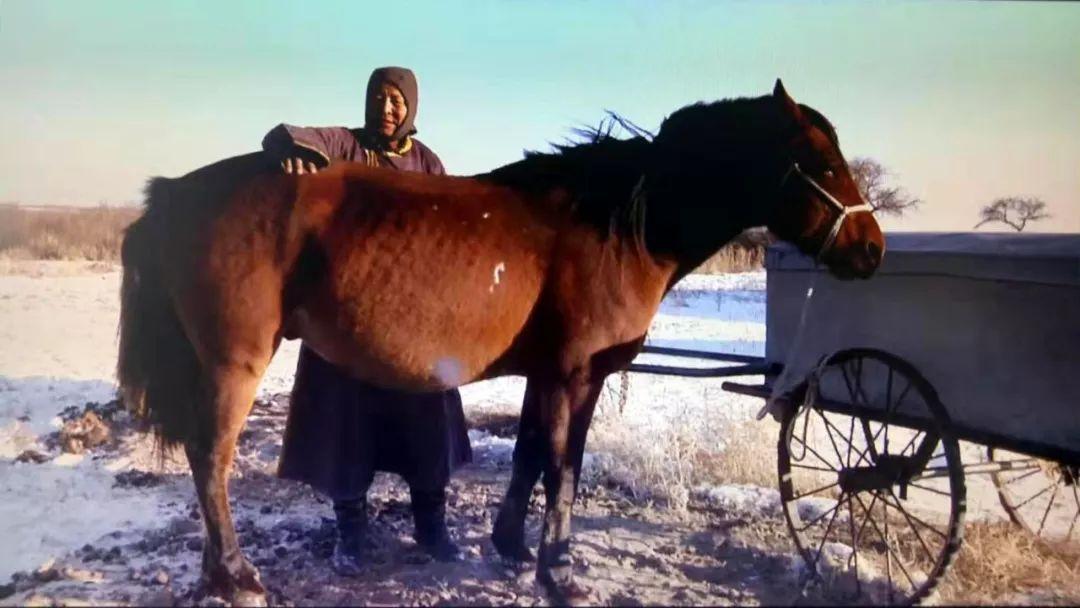 巴尔虎传统文化【第三十七期】 第10张 巴尔虎传统文化【第三十七期】 蒙古文化