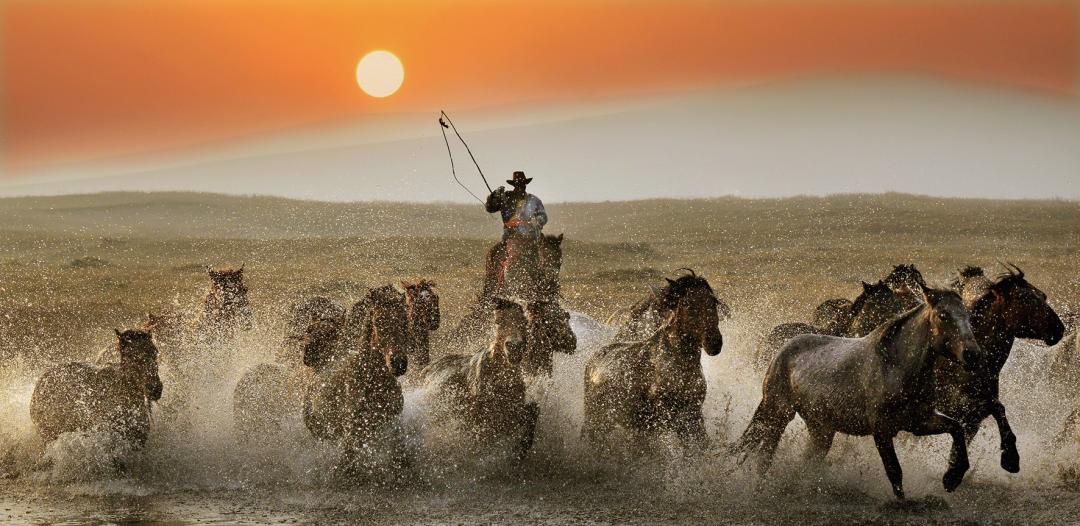 蒙古马摄影作品欣赏 第2张