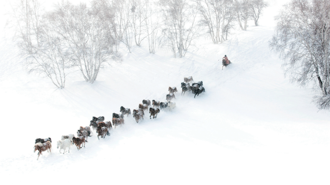 蒙古马摄影作品欣赏 第4张