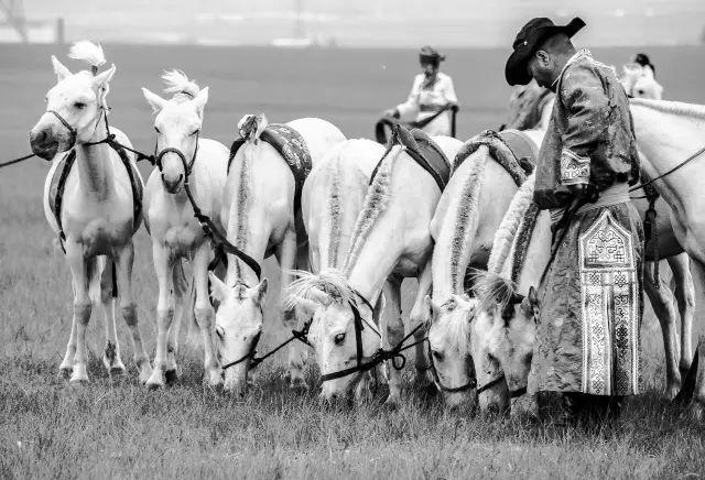 西乌珠穆沁——中国白马之乡 第1张