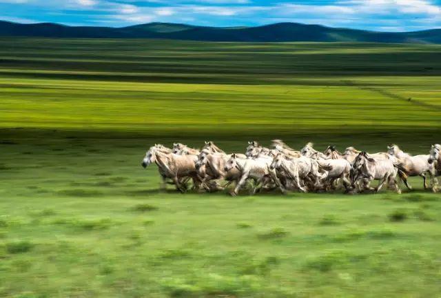 西乌珠穆沁——中国白马之乡 第11张